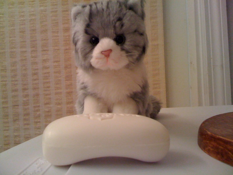 Kitten Buddy with Soap